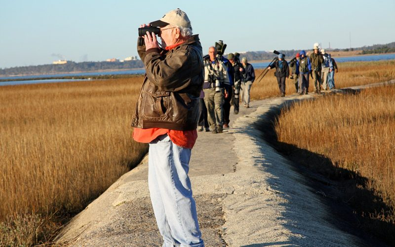 birding, bird watching