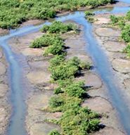 Ditching in the Hofmann Forest may have violated the federal Clean Water Act. File photo