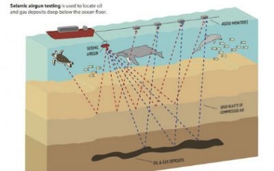 This graphic shows how seismic airgun testing is used to locate oil and gas deposits deep below the ocean floor. Graphic: Oceana