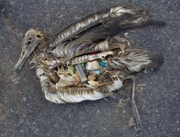 garbage-albatross