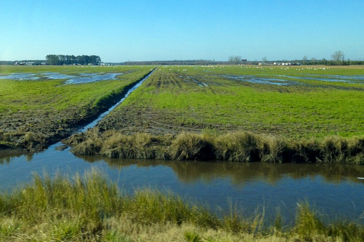 Here is an example of the ditches and canals seen on U.S. 264 in Hyde County, near Lake Mattamuskeet. Saltwater can creep further back inland via this drainage network. Photo by Julia Soplop.