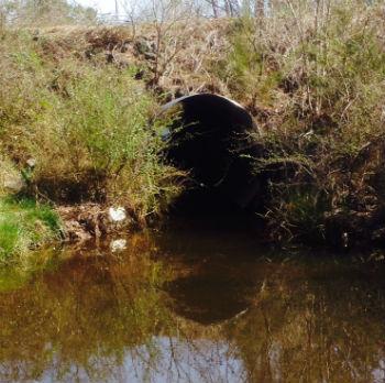 Hawkins Creek goes under N.C. 24 through this culvert. Photo: Brad Rich