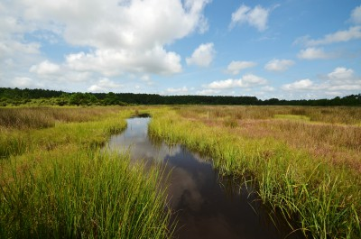 N.C. Shellfish Sanitation partnered with the N.C. Coastal Federation on a wetlands-restoration project at North River Farms in Carteret County with federal funding.