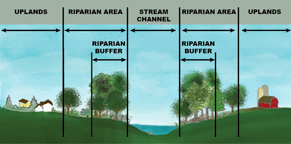 Riparian buffers, says EPA, are cheap ways to protect surface waters from nitrates in stomwater runoff