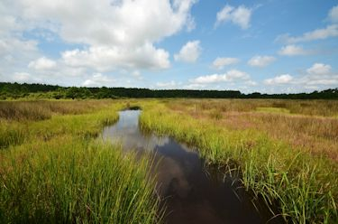 Marshes could no longer be considered wet for determining riparian buffers along the Neuse and Tar-Pamlico rivers. Photo: NCCF
