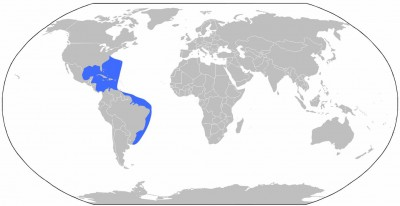 The general distribution of the Scotch bonnet, a tropical snail that prefers warm waters.