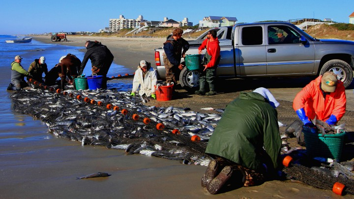 Locals of the North Carolina's central coastline work together in a time-old method of catching mullet. Photo: Sam Bland