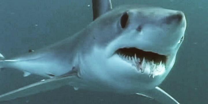 Dog attacks, lightning strikes, and boating injuries all cause many more deaths than shark attacks. Photo: Mark Conlin, NOAA