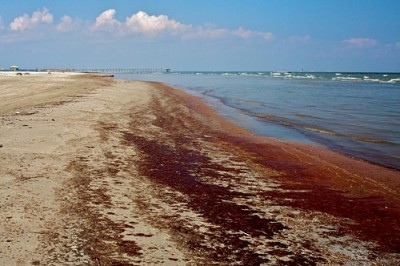 N.C. Oil Pollution and Hazardous Substances Pollution Control Act requires reporting spills to the N.C. Department of Environment and Natural Resources and other authorities. Photo: UNCW