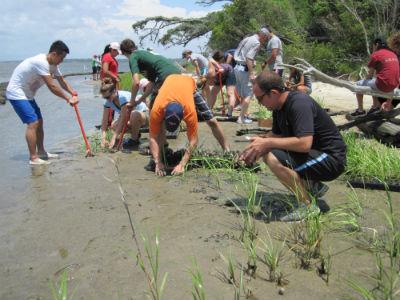 Students plants marsh grasses to create a living shoreline on Jones Island in the White Oak River.