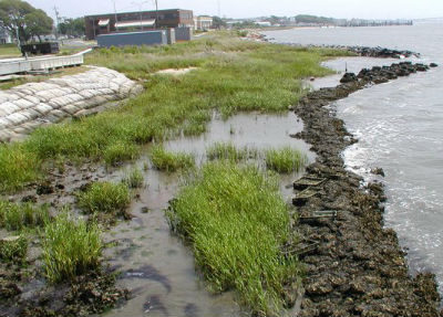 The same reef has marsh grass growing behind it a year of so later.