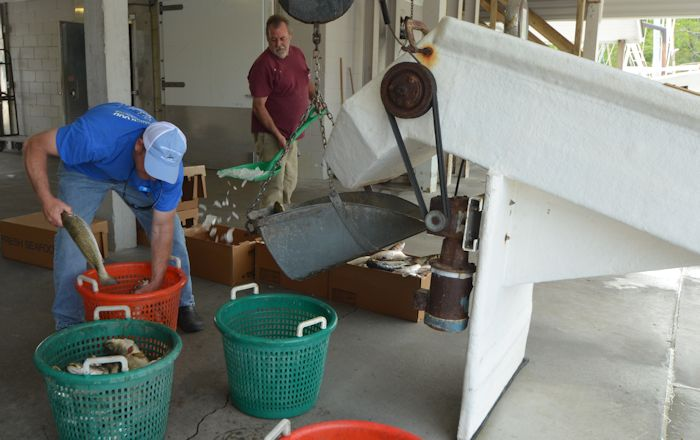 The fishermen at Mitchell's Seafood Market in Sneads Ferry spoke favorably of offshore drilling. Photo: Tess Malijenovsky