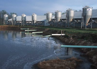 Hog waste pours into a lagoon at an industrial hog farm. Photo: Environmental Protection Agency
