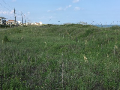 This stretch of dune line at the southern end of Topsail Beach consists of several privately owned and town owned lots. After years of natural and manmade efforts to restore the dunes, some property owners want to rebuild on their land. Photo: Trista Talton