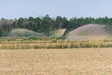 Hog waste is applied to a sprayfield. Photo: Rick Dove