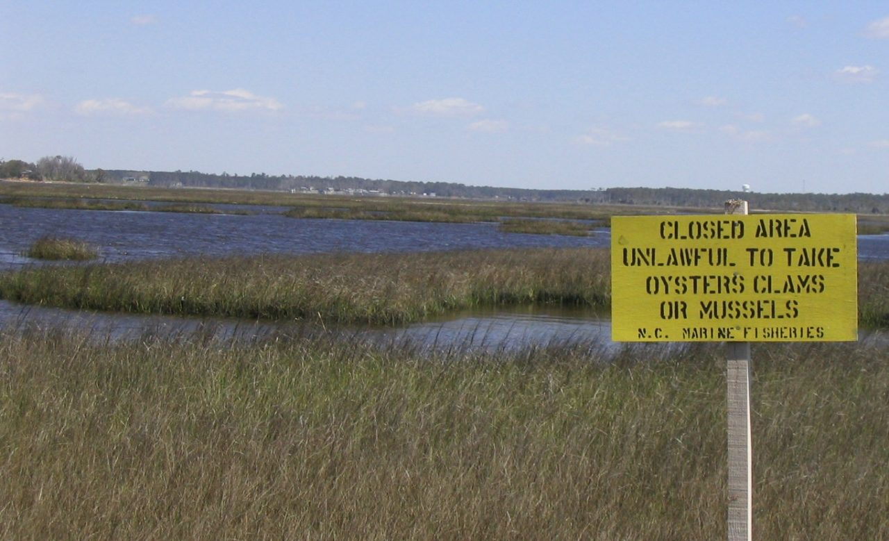 Harvesting shellfish is prohibited in much of the lower White Oak River. Most of the impaired waters in the White Oak River basin are associated with shellfish growing area classifications. Photo: File