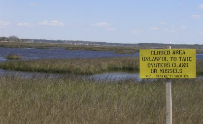 Harvesting oysters and clams is prohibited  in much of the lower White Oak River because of bacterial contamination. Photo: N.C. Coastal Federation