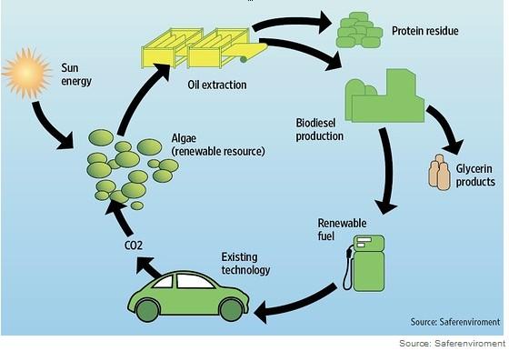 algae-illustration