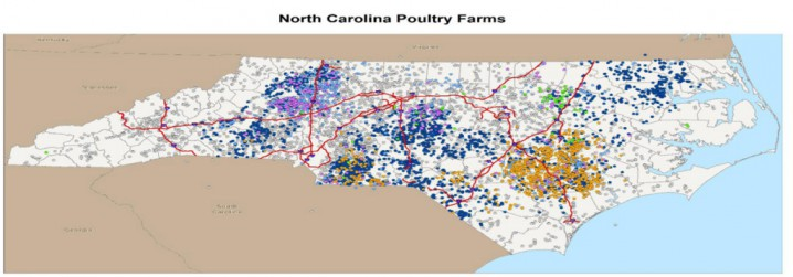 N.C. Department of Agriculture and Consumer Services map of poultry farms in North Carolina. Colored dots represent commercial farms, grey dots represent backyard flocks. Map:  NCDACS