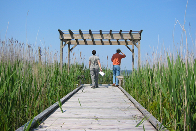 Birdwatchers peer from the boardwalk at the preserve. Photo: The Conservation Fund