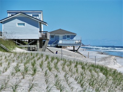 Plantings that are part of a recent renourishment project at North Topsail Beach appear unaffected by the recent storm that otherwise did about $15.6 million damage to the town's beach and dune line. Photo: Mark Hibbs, Coastal Review Online