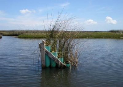 """A """"marsh organ"""" is one of the tools scientists use to predict the response of coastal marsh vegetation to changing sea levels. Photo: University of Central Florida"""