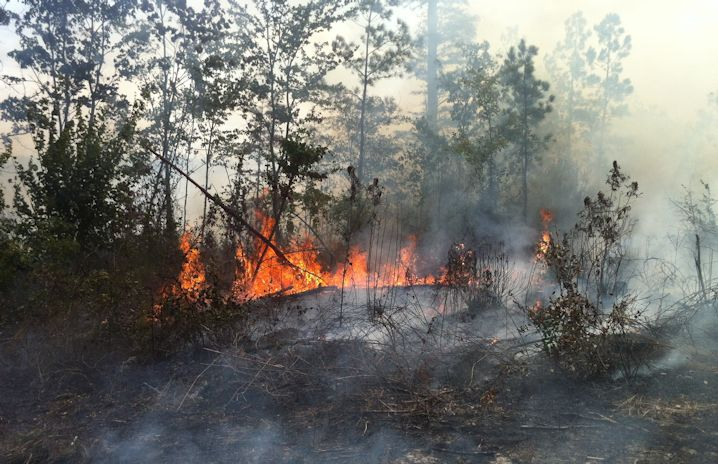 Prescribed or controlled forest fires require careful planning to ensure that the fires don't get out of hand. Photo: Allison Ballard