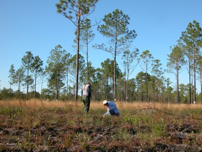 The program works with partners, including state and federal conservation agencies, national conservation groups, and the land trust community, to implement protection for ecologically significant areas, such as the South Bay Road Natural Area at Camp Lejeune. Photo: Misty Buchanan