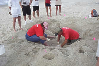 Turtle Patrol volunteers search for a nest. Photo: Holden Beach Turtle Watch Program