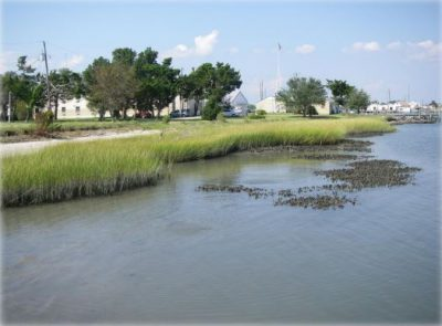 A living shoreline is in place at the NOAA Laboratory in Beaufort. Photo: Carolyn Currin, NOAA