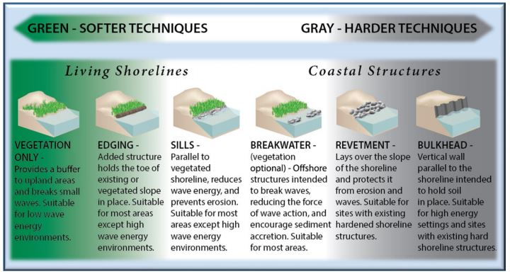 """Various shoreline-stabilization methods are shown, ranging from """"green"""" living shorelines to hardened structures, shown in gray. Image: NOAA"""