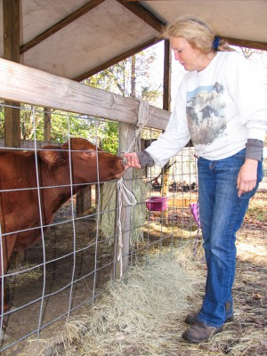 Esau, a blind and deaf red Angus calf, responds affectionately to Kim Nead's touch. Photo: Mark Hibbs