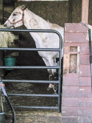 The Nead's horse, Traveler, enjoys fresh hay and a visit with the family dog. Photo: Mark Hibbs