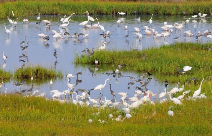 carson-birds