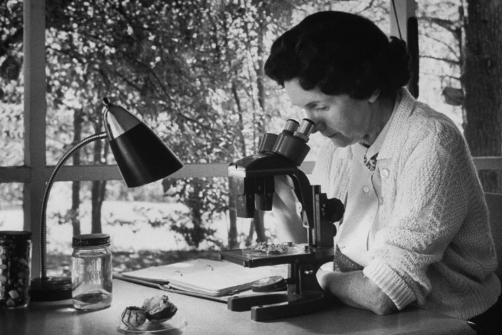 Rachel Carson arrived in Beaufort as Americans were beginning to awaken to the the natural beauty that surrounded them. Her writings would help us understand what we were losing. Photo: Library of Congress