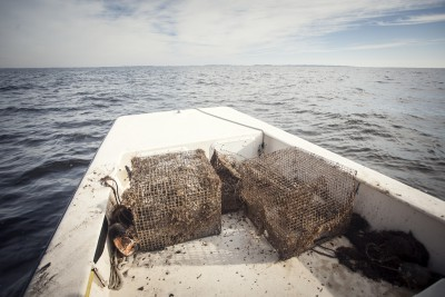 Shown are a few of the collected crab pots. Photo: Swell Films