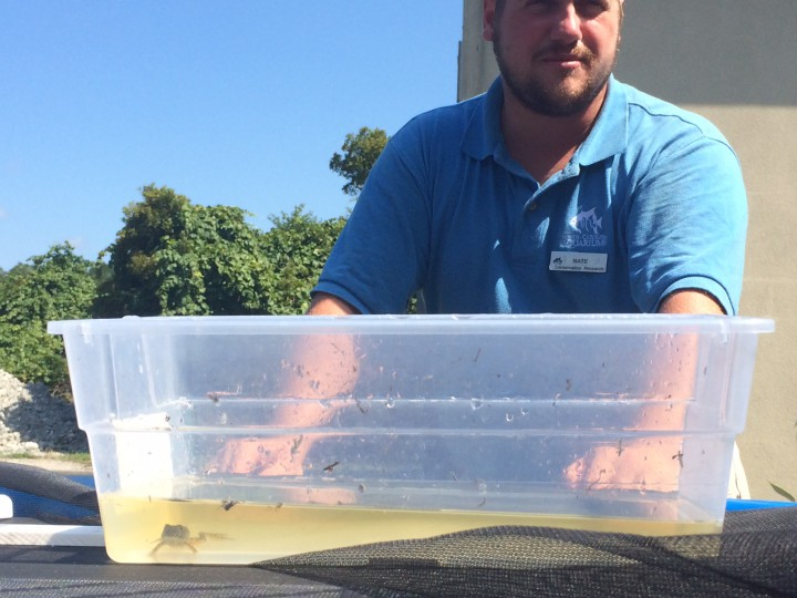 Conservation technician Nate Akers watches over a young Carolina gopher frog in a plastic container after retrieving it from outdoor tanks at the N.C. Aquarium at Fort Fisher. Photo: Mark Hibbs