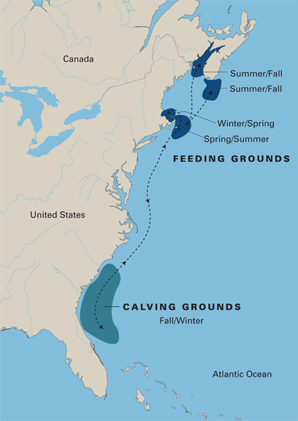 The inclusion of calving areas in the habitat protection plan for the north Atlantic right whale has caused federal fisheries managers to study the seismic survey permits more slowly. Map: NOAA