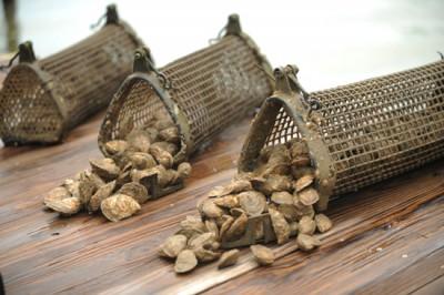 Shellfish can b grown under docks in baskets like these. Photo: Auburn University