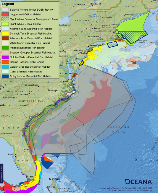 Habitat areas overlap with the swath of the Atlantic currently being considered for seismic airgun blasting. Map: Oceana