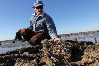 Niels Lindquist holds up a block of his fast-growing oysters behind the UNC Institute of Marine Sciences. Photo: Mary Lide Parker/UNC Research