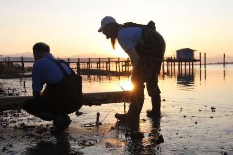 """Niels Lindquist, a researcher at the UNC Institute of Marine Sciences, left, has teamed up with a local fisherman, David """"Clammerhead"""" Cessna to figure out the best way to grow all-natural oytsers along North Carolina's coast. Photo: Mary Lide Parker"""