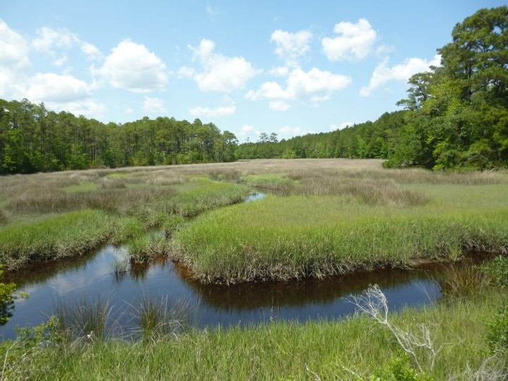 The N.C. Coastal Land Trust has purchased this property, 302 acres near Newport. Photo: N.C. Coastal Land Trust