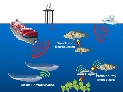 Acoustic sources and their effects on marine life. Illustration: University of Maryland