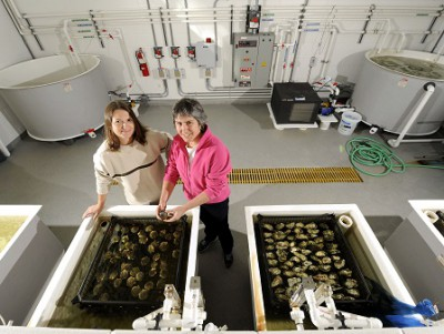 Ami Wilbur, right, with technician Amy Finelli, directs the UNCW Shellfish Research Hatchery, studying oysters and other North Carolina. Photo: North Carolina Sea Grant