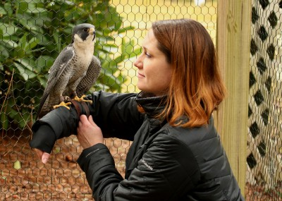 Breen with Phoenix the pereguin falcon. Photo: Sam Bland