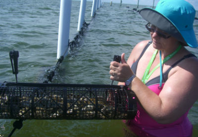Heather O'Neal closes one of the oyster cages. The oysters, she says, taste like the water where they grow. Photo: Pat Garber