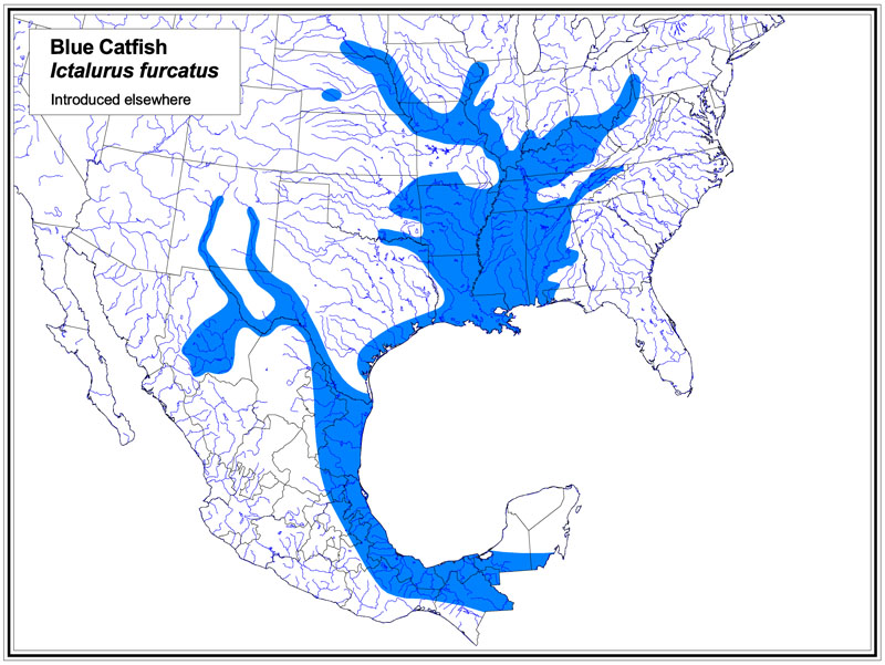 The blue-shaded areas indicate the native range of the blue catfish. Map: Florida Museum of Natural History
