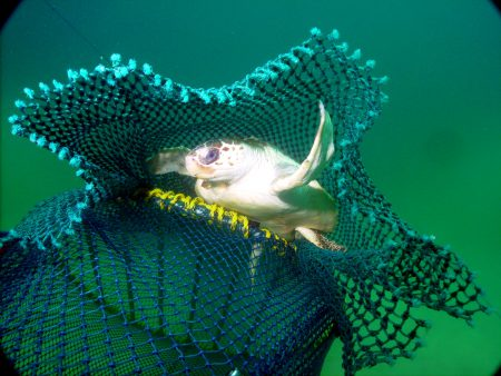 A sea turtle escapes a fishing trawl through an extruder device. Photo: Dan Foster, NOAA