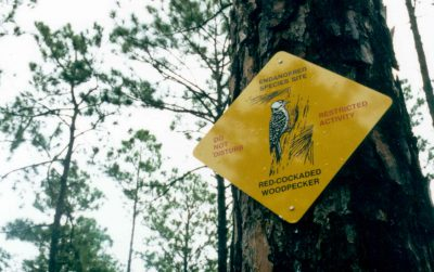 Red-cockaded woodpecker signs alert soldiers of protected areas at Fort Bragg. Photo: U.S. Army Environmental Command